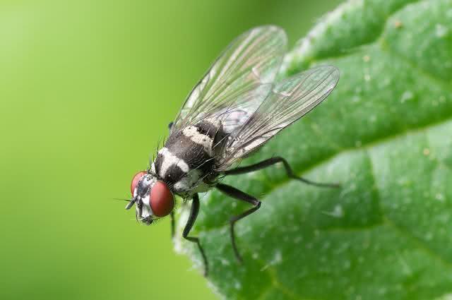 Aprenda truques caseiros para acabar com as moscas na cozinha