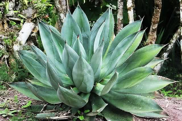 Conheça algumas plantas capazes de trazer energias positivas