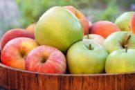 É possível emagrecer comendo maçã?