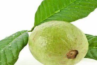 Folha da goiabeira pode tratar acne, rugas e espinhas