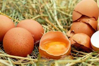 Máscara de ovo pode combater a acne. Confira