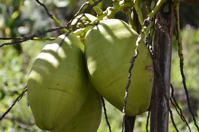 os-10-alimentos-que-vao-te-deixar-mais-saudavel coco