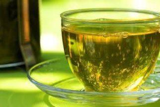 Pesquisa afirma que composto encontrado no chá verde combate o vírus zika