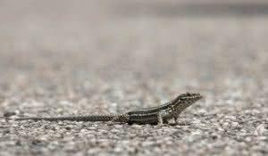 saiba-como-afastar-da-sua-casa-os-temidos-lagartos-e-lagartixas