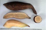 Trate diabetes, emagreça e previna o câncer com suco da batata yacón