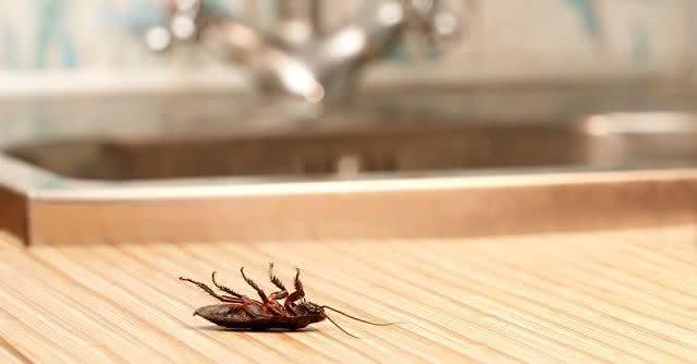 Truques caseiros para livrar sua casa de ratos, baratas, formigas