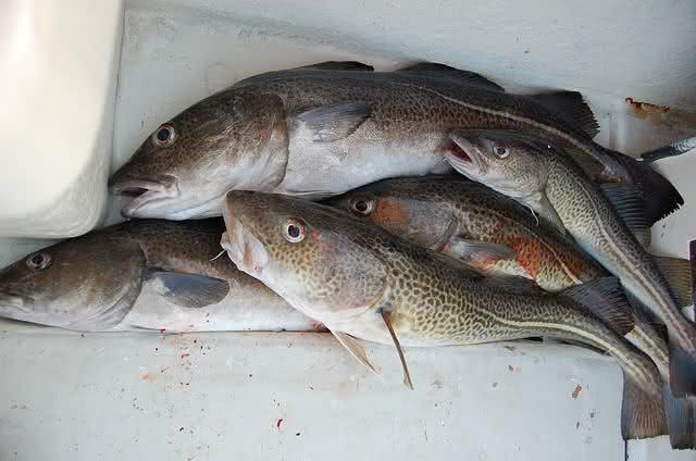 6-alimentos-que-protegem-os-olhos-contra-qualquer-mal-bacalhau