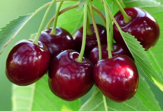 as-frutas-podem-te-ajudar-a-eliminar-o-acido-urico-do-corpo-cereja