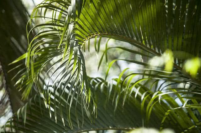 durma-bem-conheca-as-plantas-que-todos-deviam-ter-no-quarto-palmeira