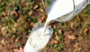 pesquisa-afirma-que-proteina-do-leite-atua-contra-zika-e-chikungunya
