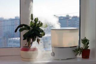 Inverno: como melhorar a qualidade do ar dentro de casa