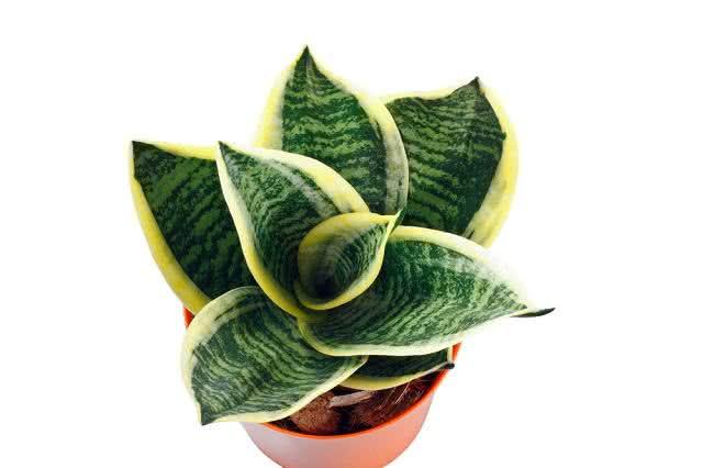 Nasa confirma: plantas purificam o ar de ambientes fechados