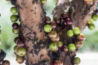 Previna o envelhecimento e o câncer com essas frutas