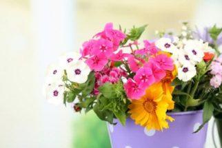 Quer mudar a cor das flores dos vasos da sua casa? Veja truque