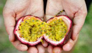 Farmer showing fresh ripe Passion fruit