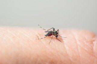 Use água sanitária no combate à larva do Aedes aegypti