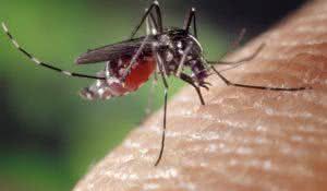 epidemias-de-zika-e-chikungunya-serao-mais-fortes-em-2017-alerta-fiocruz