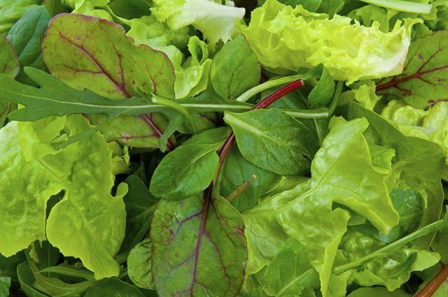As folhas verdes são ricas em nutrientes importantíssimos para a saúde. São fontes de fibras, vitaminas e minerais