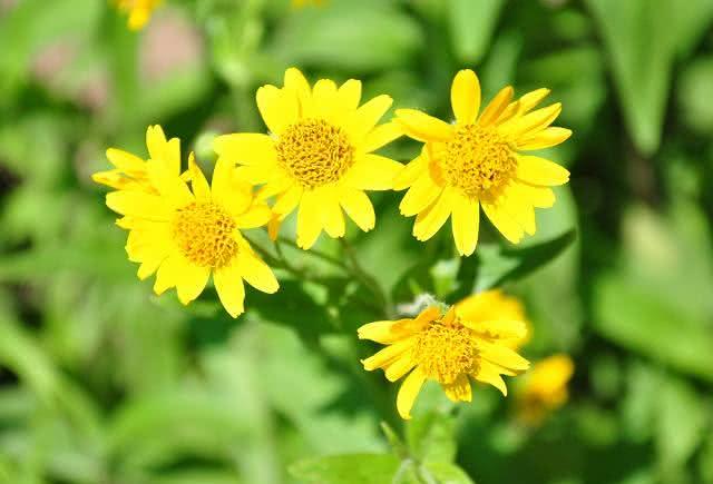 Remédio caseiro com mistura de plantas ajuda a reduzir as dores nas juntas