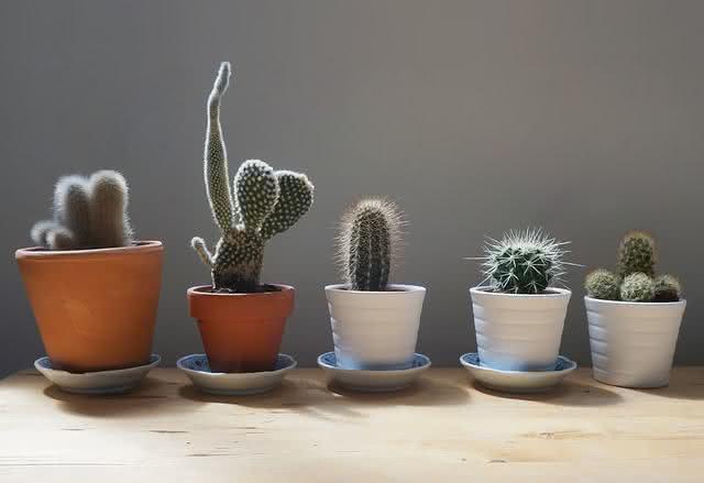 7 espécies de plantas que deixam sua casa mais harmônica. Confira