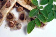 Planta é capaz de servir como filtro natural para água. Descubra