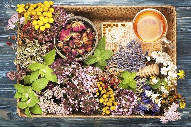 A fitoterapia se baseia no uso de plantas em benefício da saúde