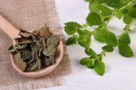 Erva cidreira: usos e benefícios dos diversos tipos dessa planta