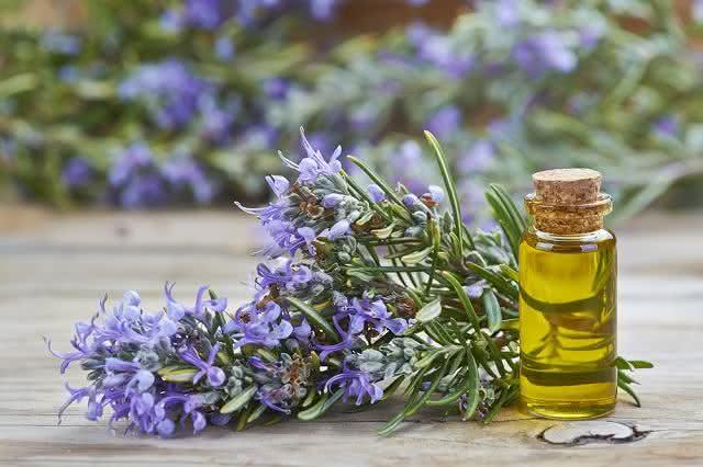 Aprenda como fazer óleo de alecrim caseiro e usufrua de seus benefícios