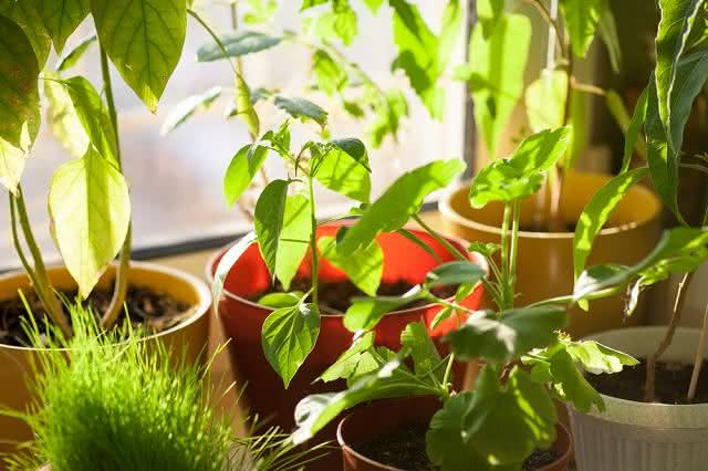 Fitoenergia: sistema de cura usa as plantas para promover equilíbrio