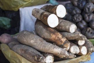 Macaxeira (mandioca): Como acertar na escolha dessa raiz na hora da compra