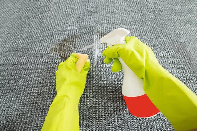 Como tirar manchas de xixi de cão ou gato do carpete