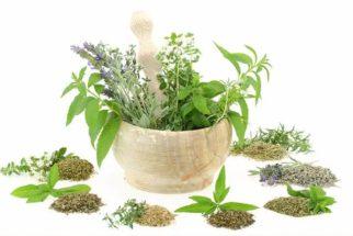 5 remédios fitoterápicos distribuídos pelo SUS para doenças simples