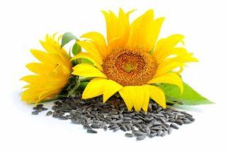 Especialista revela 2 ótimas fontes de vitamina E. Descubra quais são