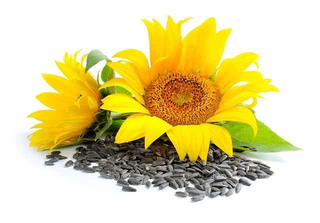 Especialista revela duas das melhores fontes de vitamina E. Descubra quais são