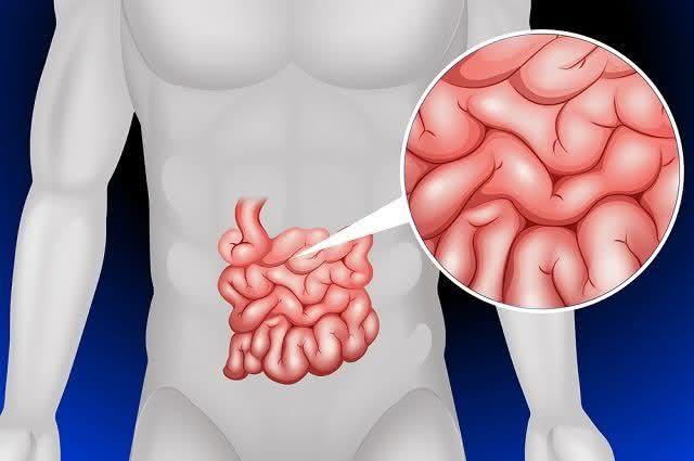 Intestino permeável pode ser a causa de muitas doenças, sabia dessa? Entenda