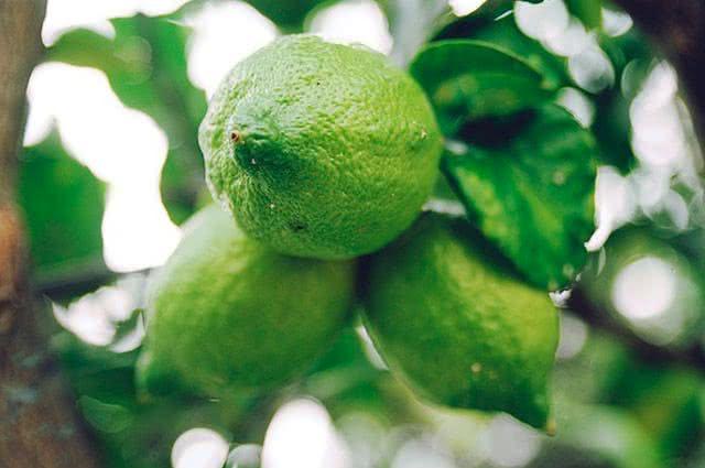 Comidas ricas em vitamina C - Limão