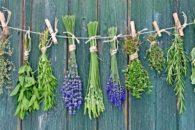 Como fazer chás com ervas finas