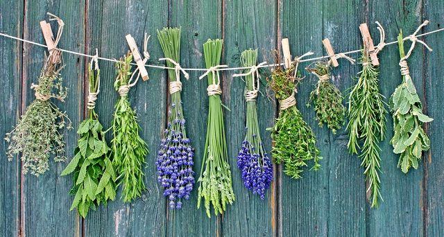 O chá de ervas finas ajuda no emagrecimento do corpo