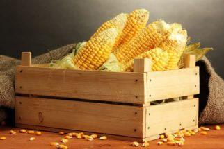 Receita junina: Veja como preparar deliciosa tortinha de milho verde