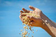 Sabe como a proteína de soja é feita? Descubra isso e os benefícios dela