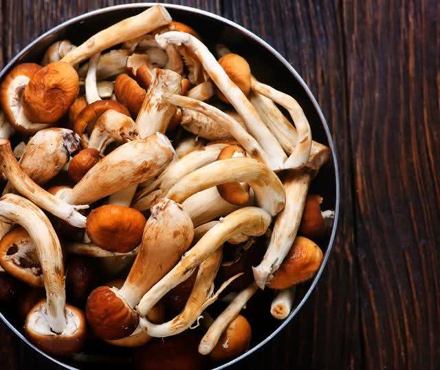 cogumelo-rico-em-vitamina-b12