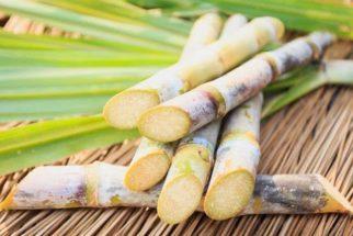 Confira como preparar receitas caseiras usando a cana-de-açúcar