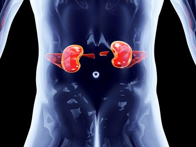Especialistas ensinam como prevenir e tratar o cálculo renal de forma caseira
