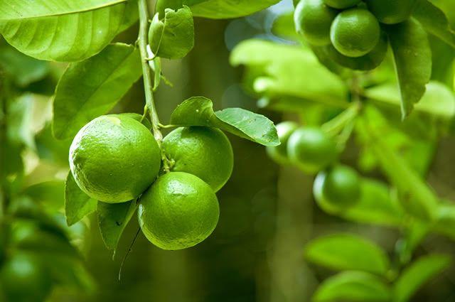 Essa fruta, de sabor ácido, é rica em antioxidantes, vitaminas e minerais. Por isso ela é aliada da saúde e do bem-estar
