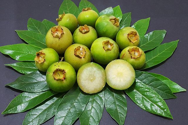 Frutos e folhas da gabiroba