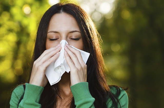 Alho, folhas de sabugueiro e chá verde são opções para tratar alergia a poeira