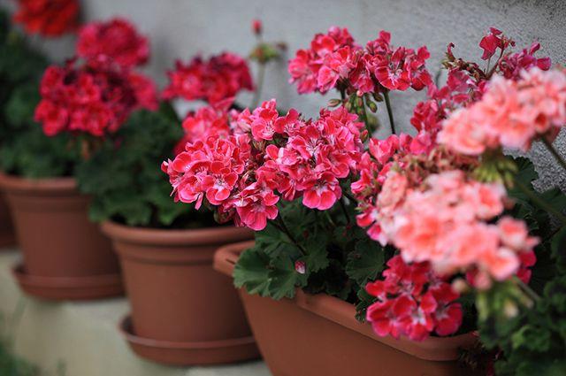 Plantas para jardins pequenos devem ser escolhidas com base na sua raiz e tamanho quando adultas