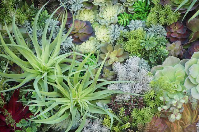 Existem espécies de plantas indicadas para jardins de inverno como suculentas e bromélias