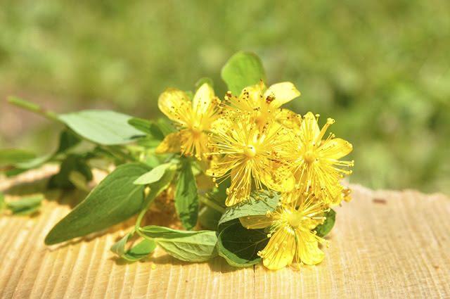 A erva de São João é muito conhecida por seu efeito antidepressivo