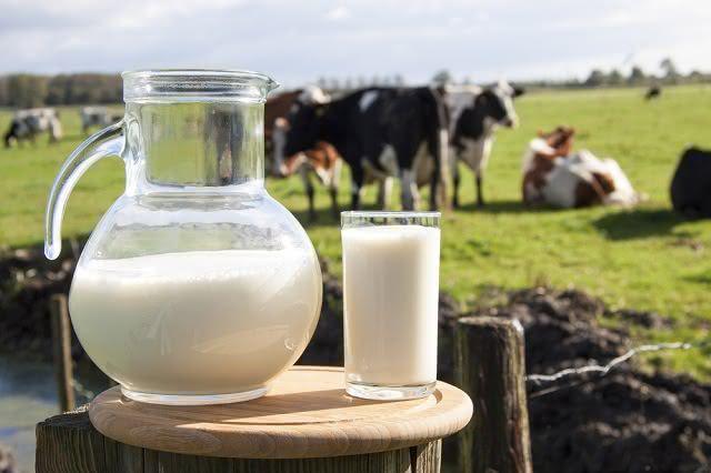 A ingestão de leite de vaca evita doenças como o câncer